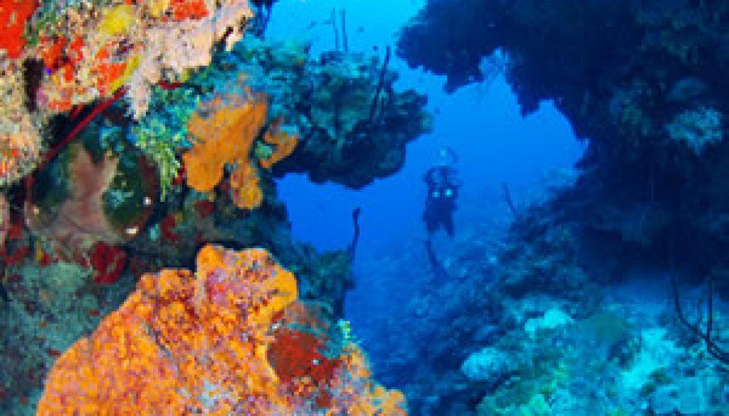 Dive Destinations