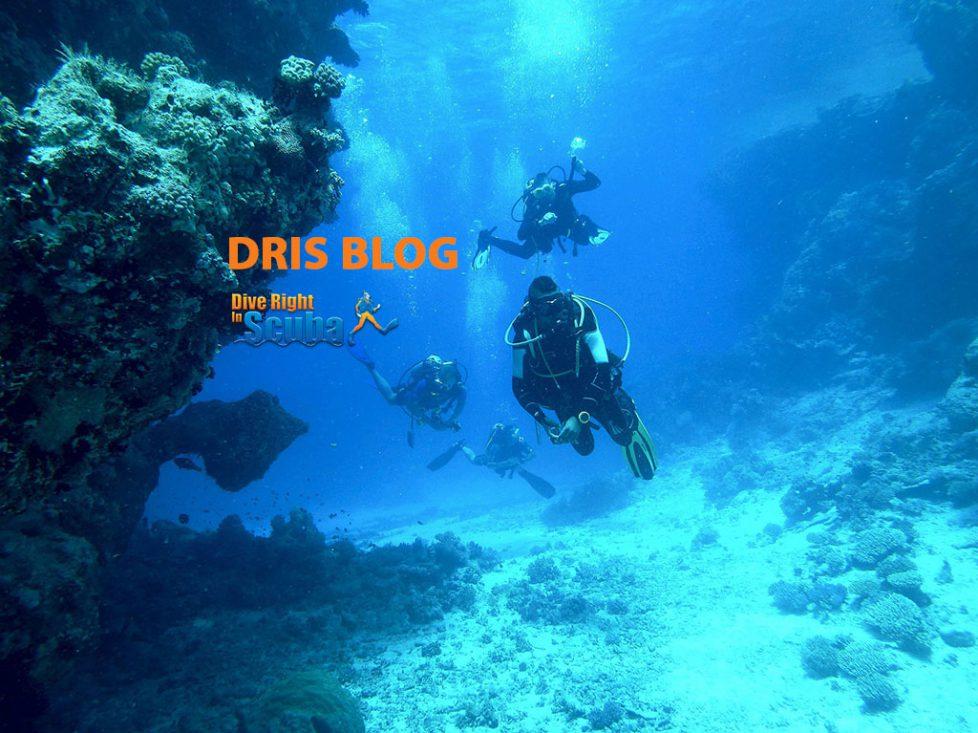 diving-813028_1920 (1) copy